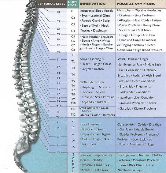 spinal_nerve_chart.jpg